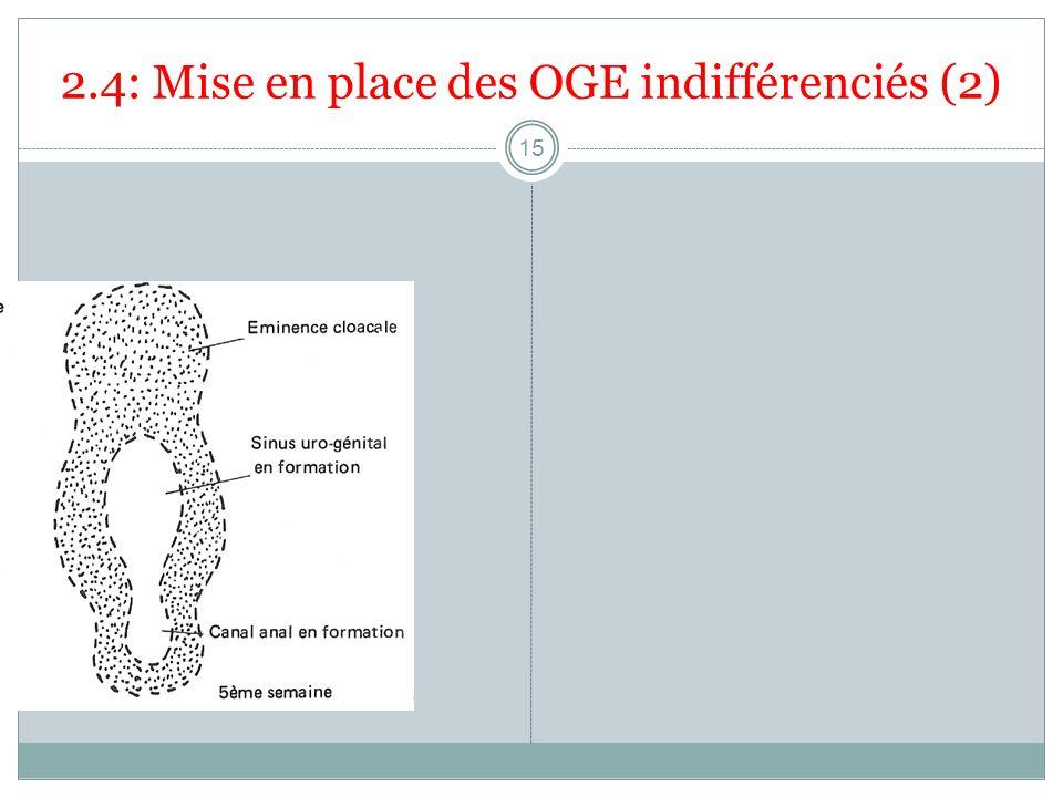 2.4: Mise en place des OGE indifférenciés (2)