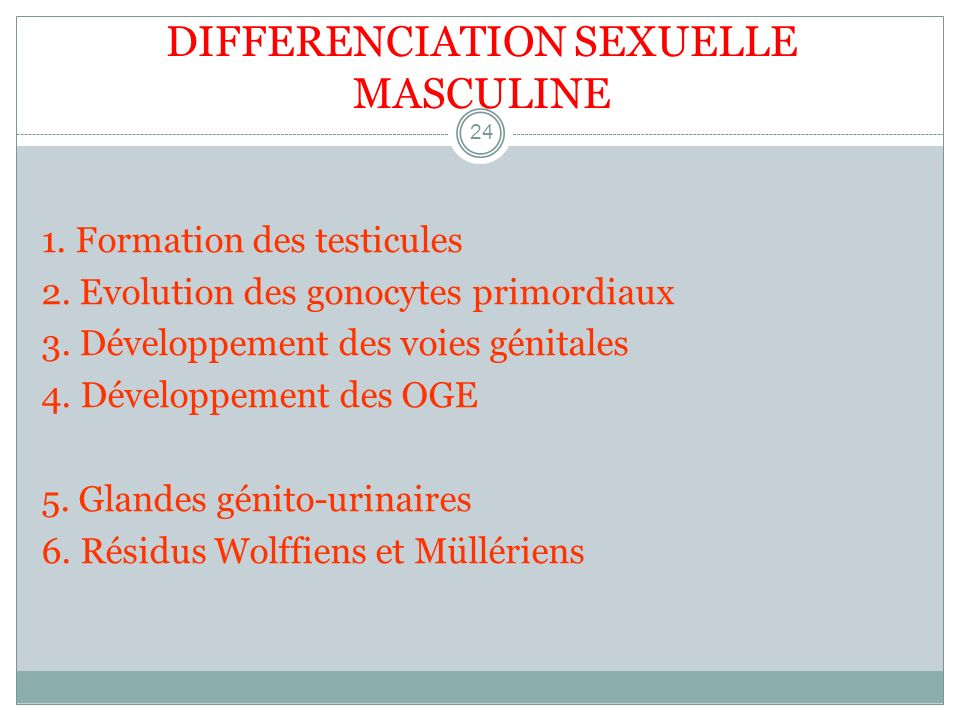 DIFFERENCIATION SEXUELLE MASCULINE