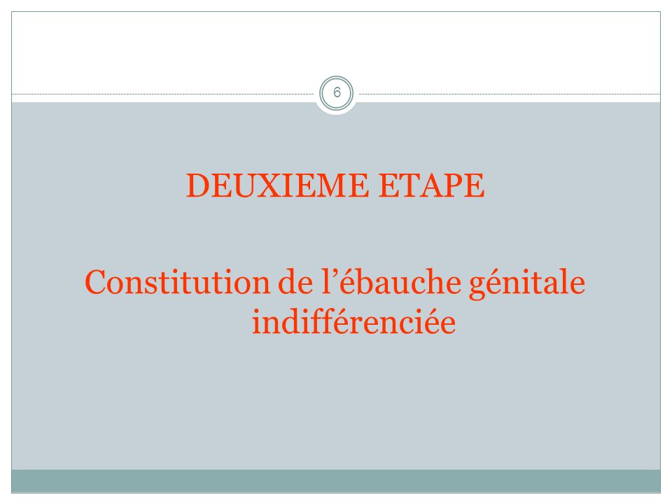Constitution de l'ébauche génitale indifférenciée