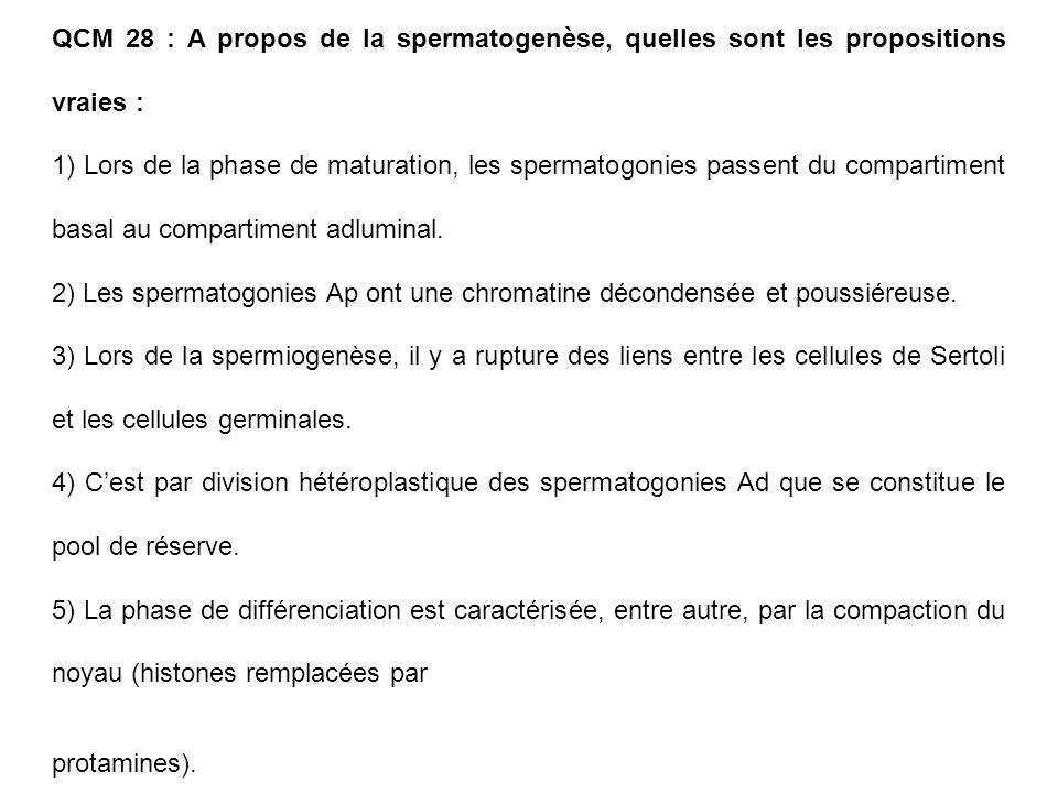 QCM 28 : A propos de la spermatogenèse, quelles sont les propositions vraies :