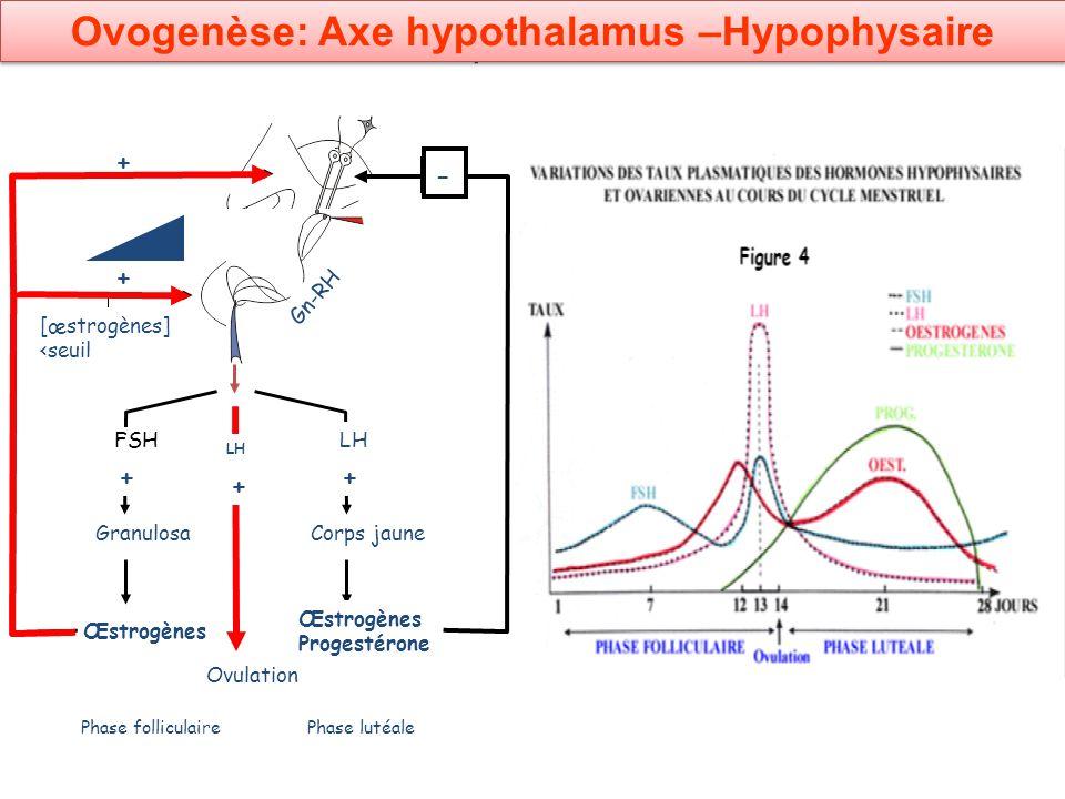 Ovogenèse: Axe hypothalamus –Hypophysaire