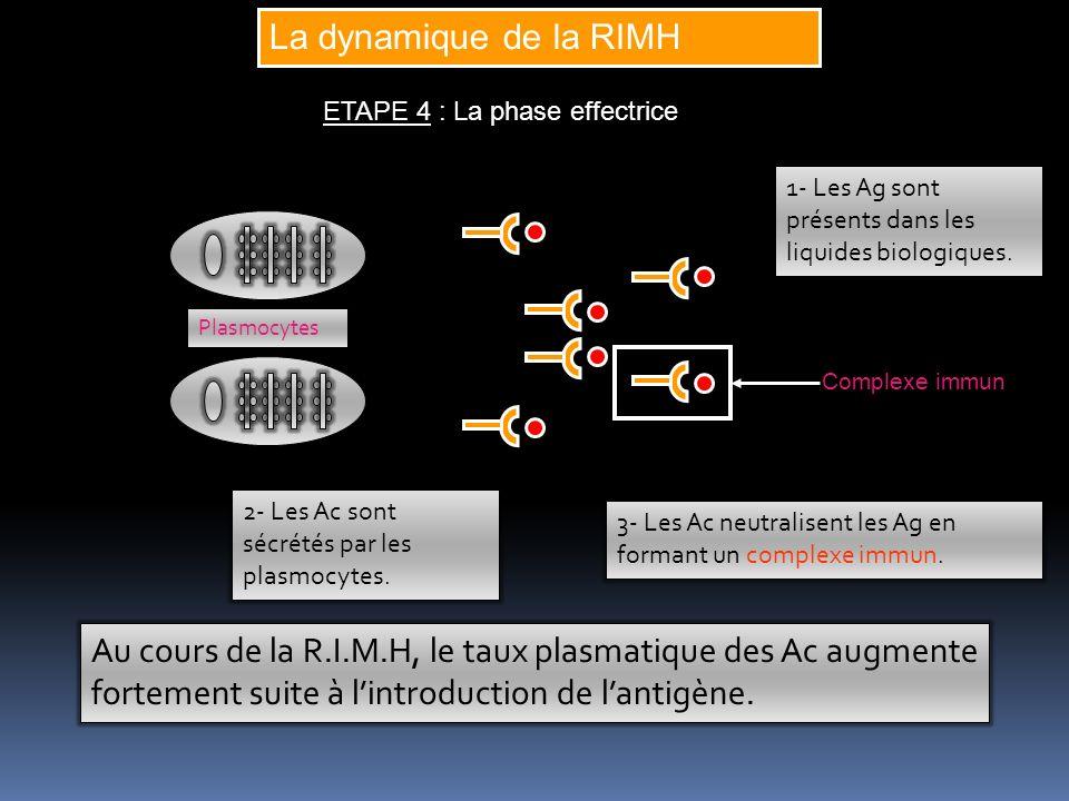 La dynamique de la RIMH ETAPE 4 : La phase effectrice. 1- Les Ag sont présents dans les liquides biologiques.
