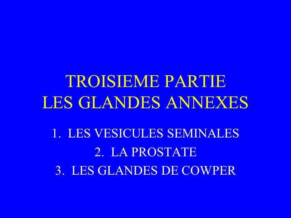 TROISIEME PARTIE LES GLANDES ANNEXES