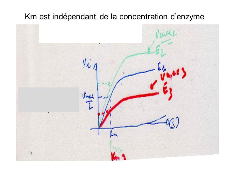 Km est indépendant de la concentration d'enzyme