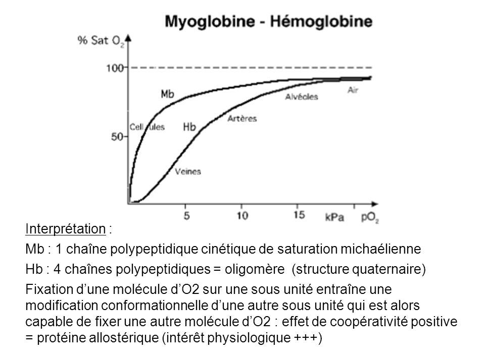 Interprétation : Mb : 1 chaîne polypeptidique cinétique de saturation michaélienne.