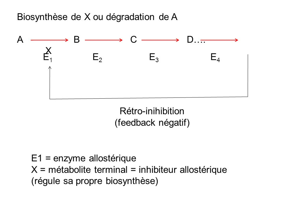 Rétro-inihibition (feedback négatif)