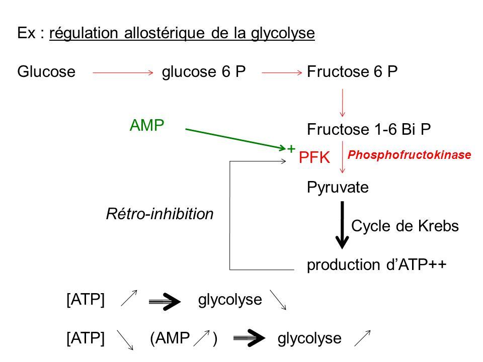 Ex : régulation allostérique de la glycolyse