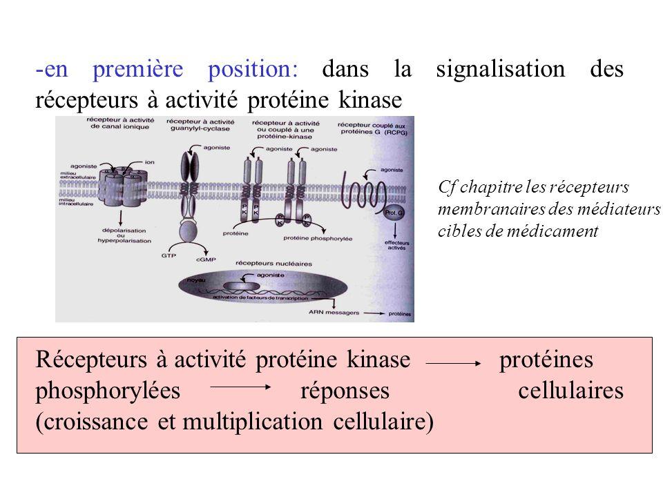 en première position: dans la signalisation des récepteurs à activité protéine kinase