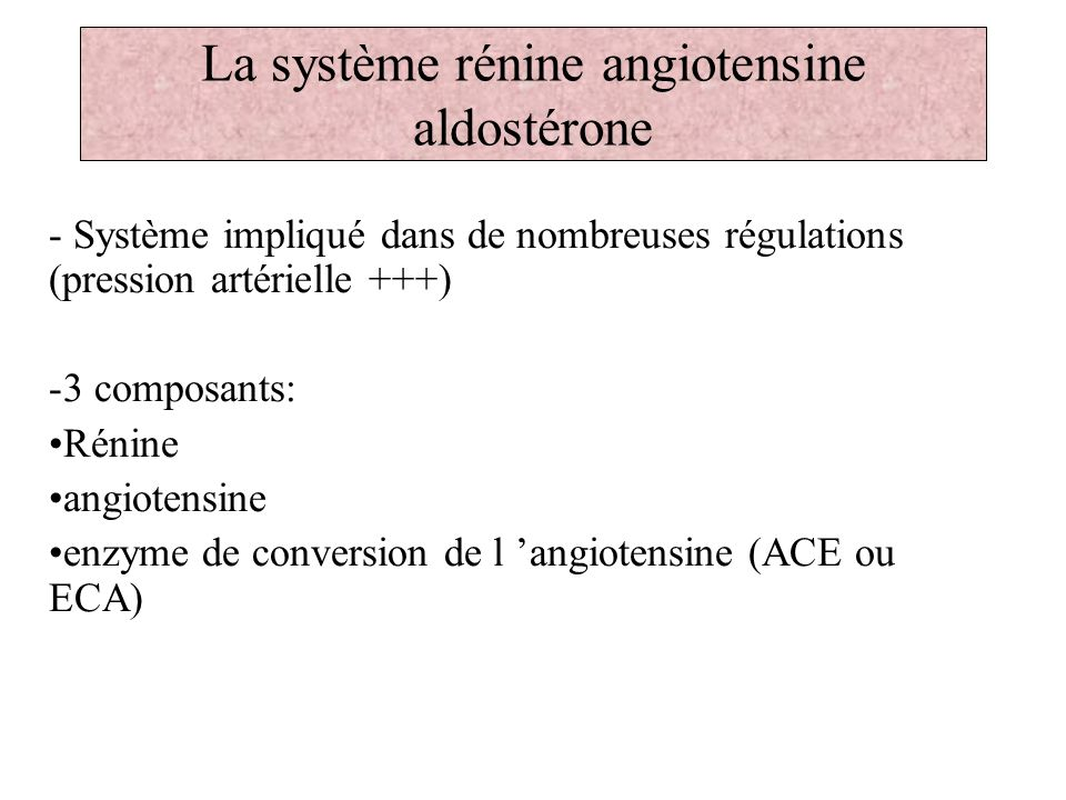 La système rénine angiotensine aldostérone