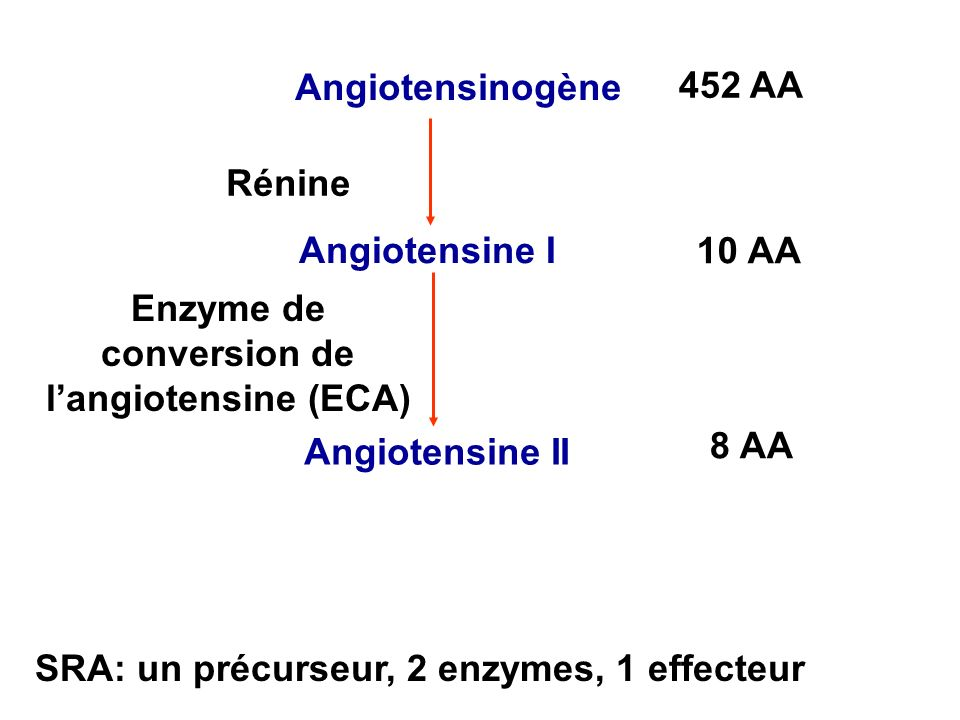 Enzyme de conversion de SRA: un précurseur, 2 enzymes, 1 effecteur