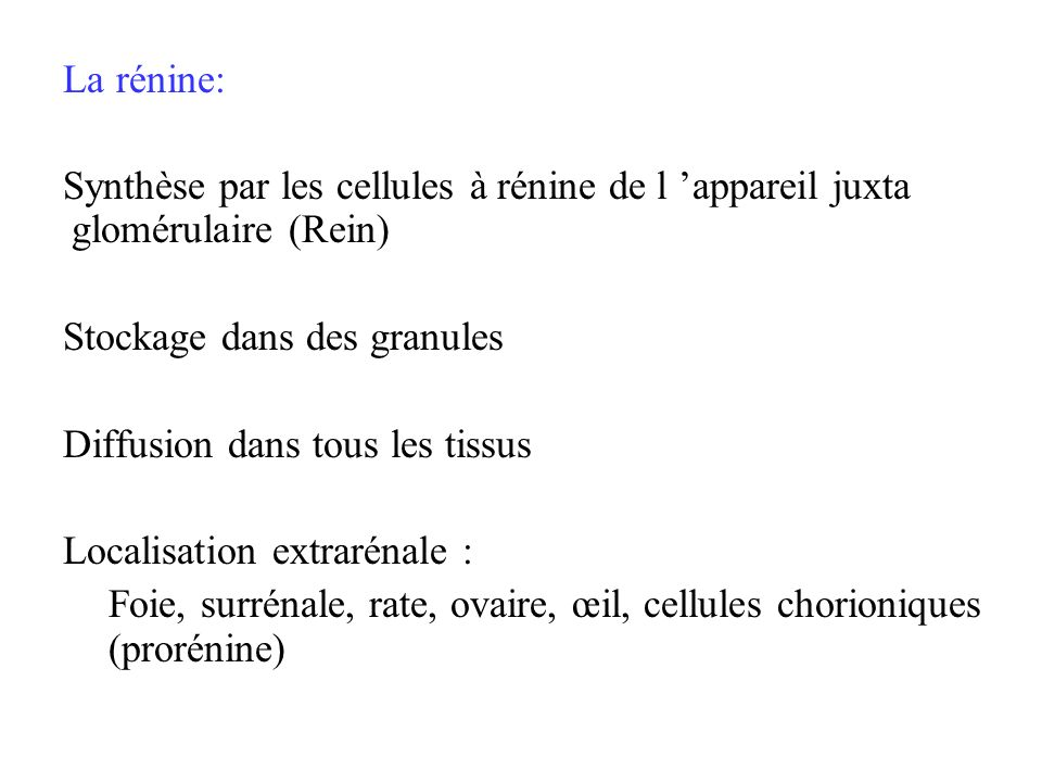 La rénine: Synthèse par les cellules à rénine de l 'appareil juxta glomérulaire (Rein) Stockage dans des granules.