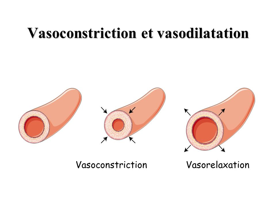 Vasoconstriction et vasodilatation