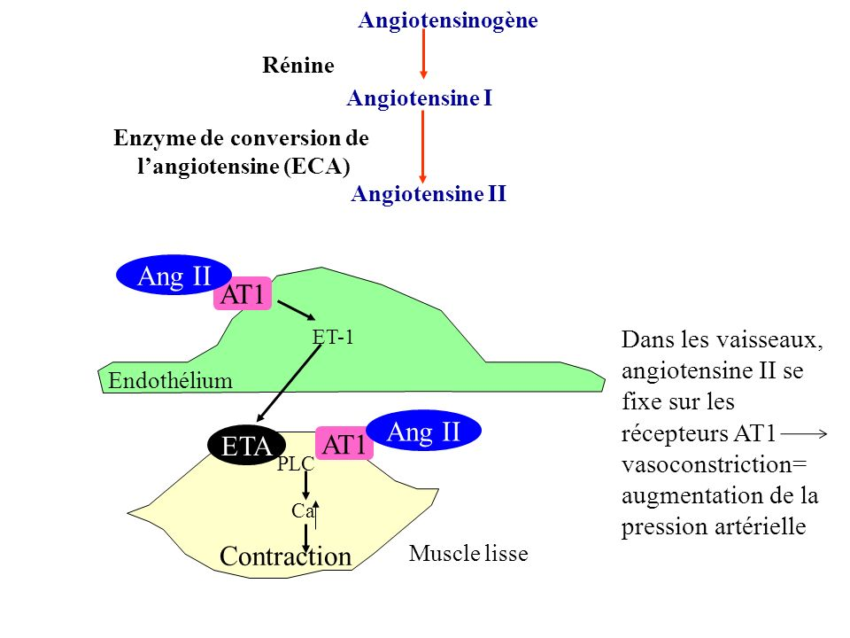 Enzyme de conversion de