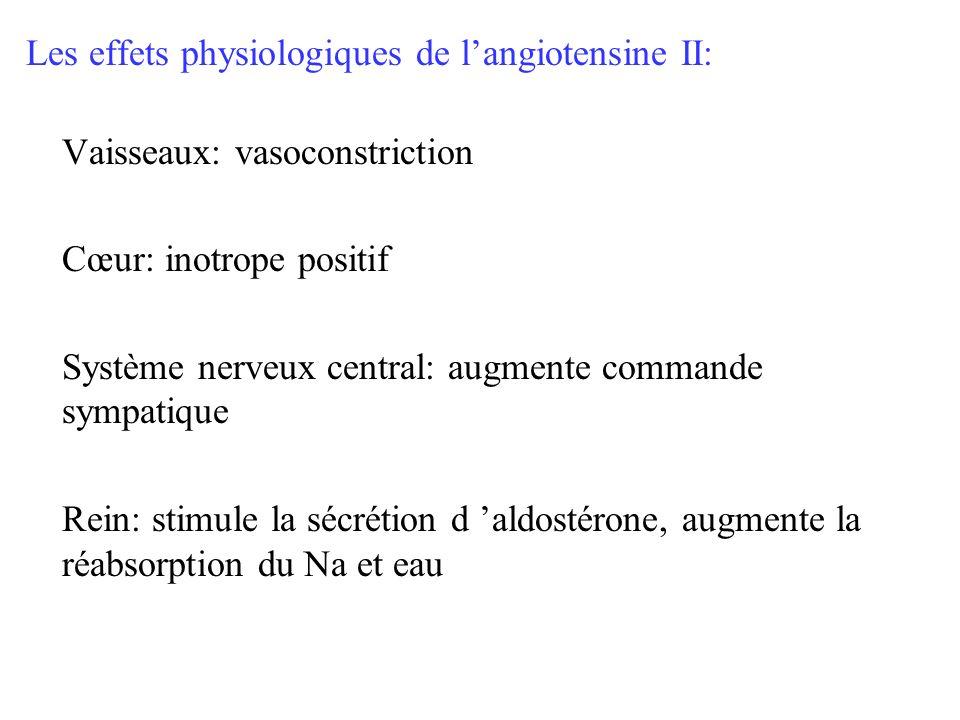 Les effets physiologiques de l'angiotensine II: