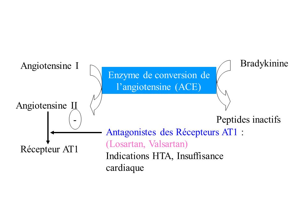 Enzyme de conversion de l'angiotensine (ACE)