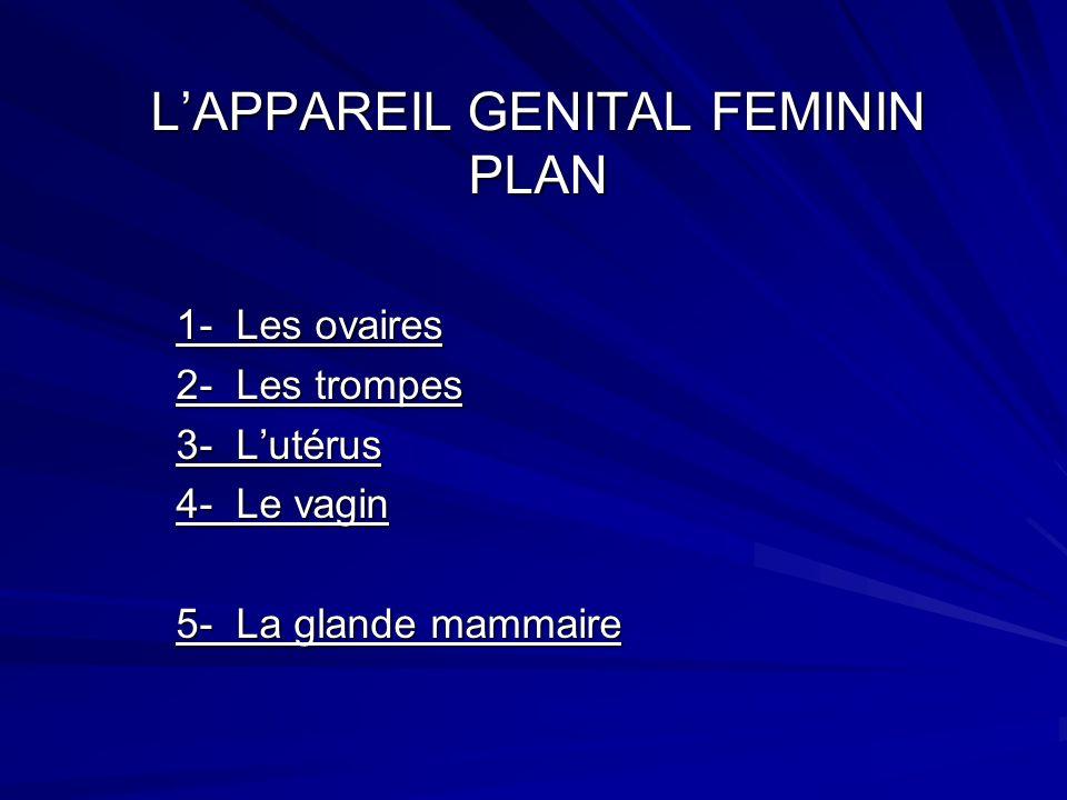 L'APPAREIL GENITAL FEMININ PLAN