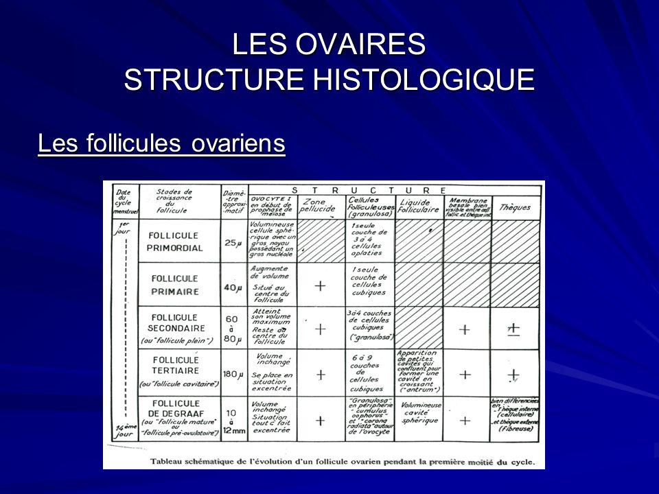 LES OVAIRES STRUCTURE HISTOLOGIQUE