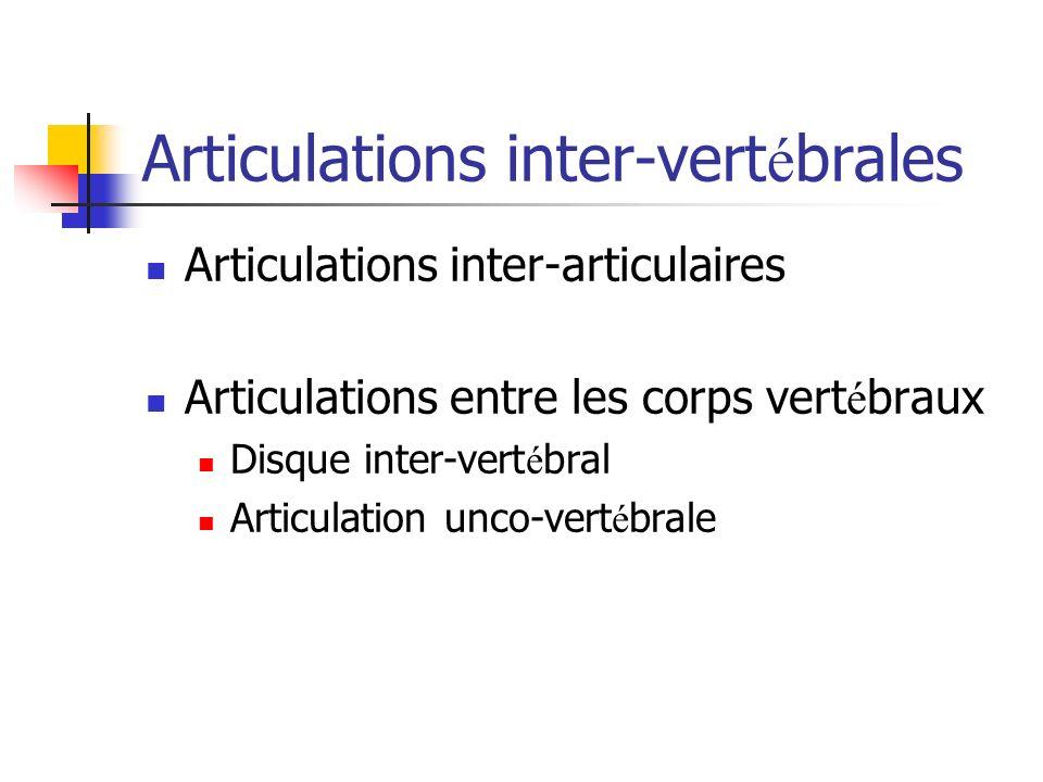 Articulations inter-vertébrales