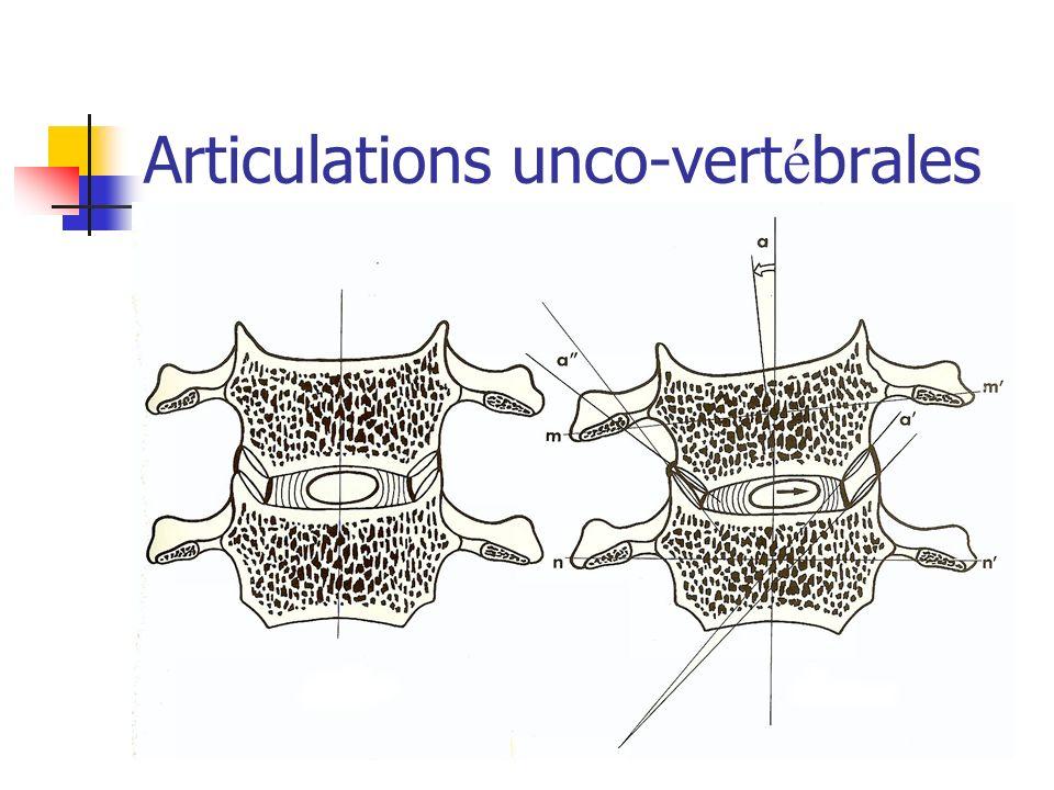 Articulations unco-vertébrales