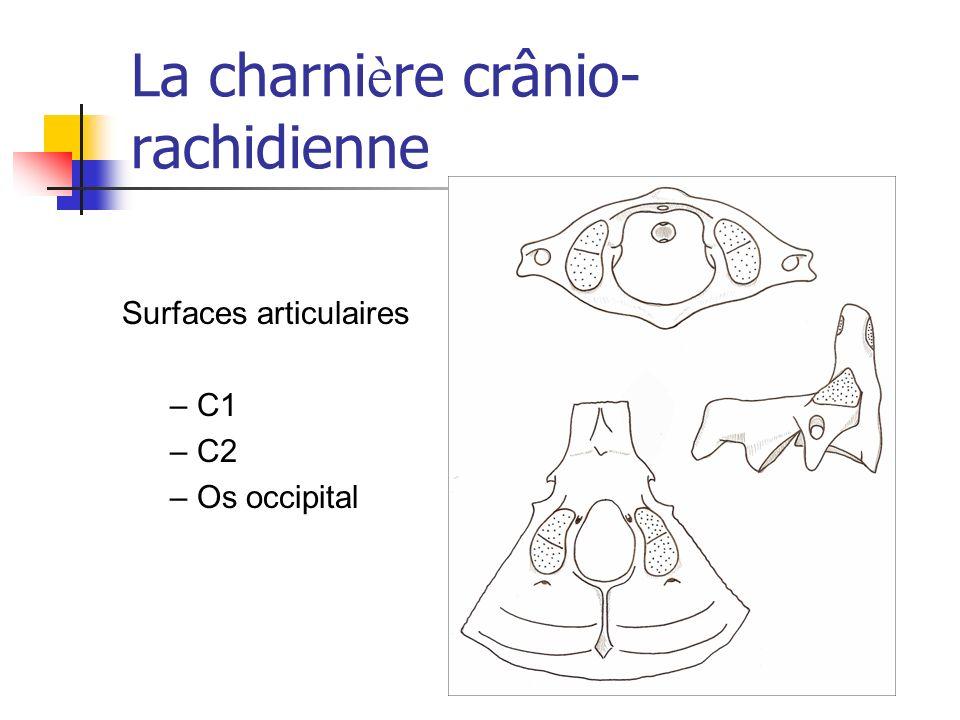 La charnière crânio-rachidienne