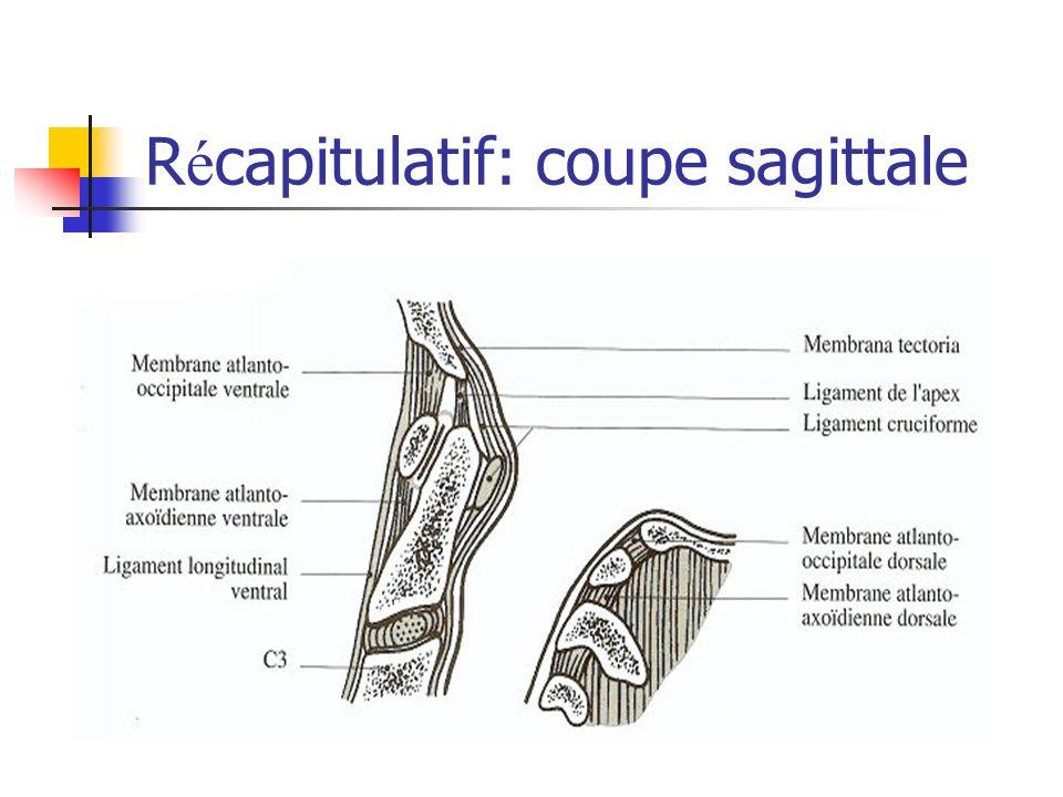 Récapitulatif: coupe sagittale