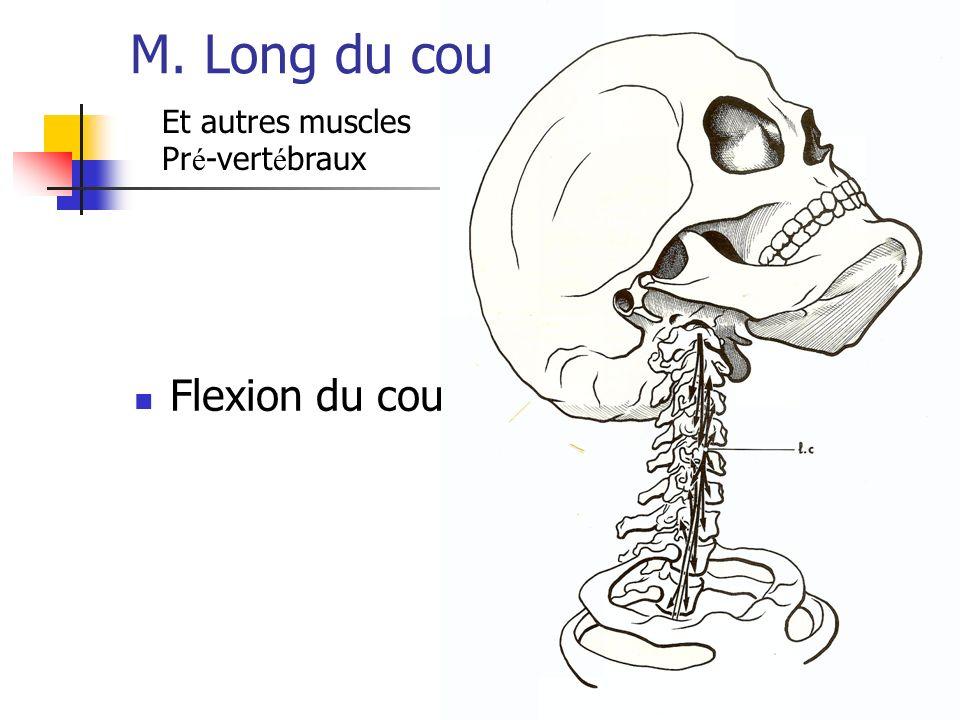 M. Long du cou Et autres muscles Pré-vertébraux Flexion du cou