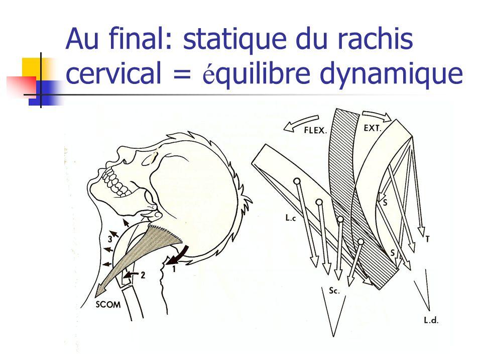 Au final: statique du rachis cervical = équilibre dynamique