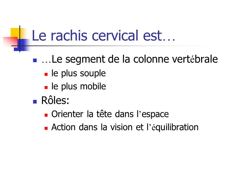 Le rachis cervical est…