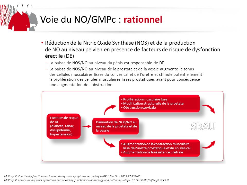 SBAU Voie du NO/GMPc : rationnel