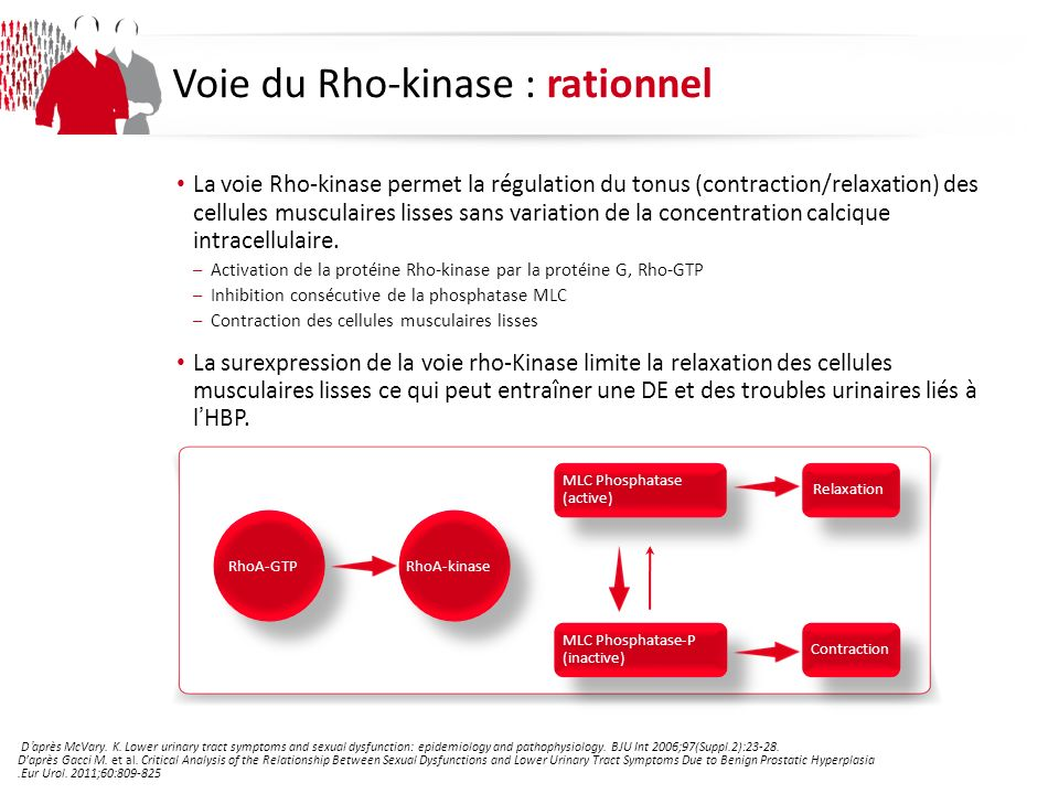 Voie du Rho-kinase : rationnel