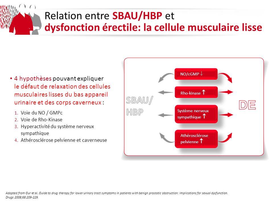Relation entre SBAU/HBP et dysfonction érectile: la cellule musculaire lisse