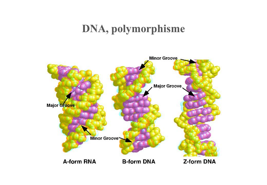 DNA, polymorphisme
