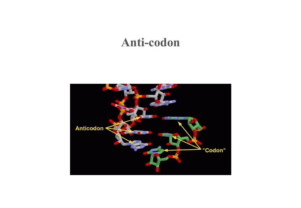 Anti-codon