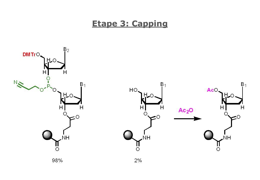 Etape 3: Capping