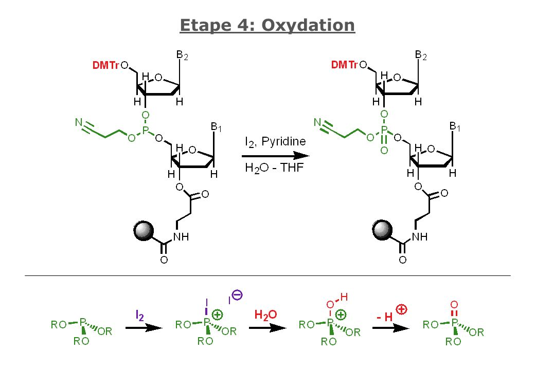 Etape 4: Oxydation