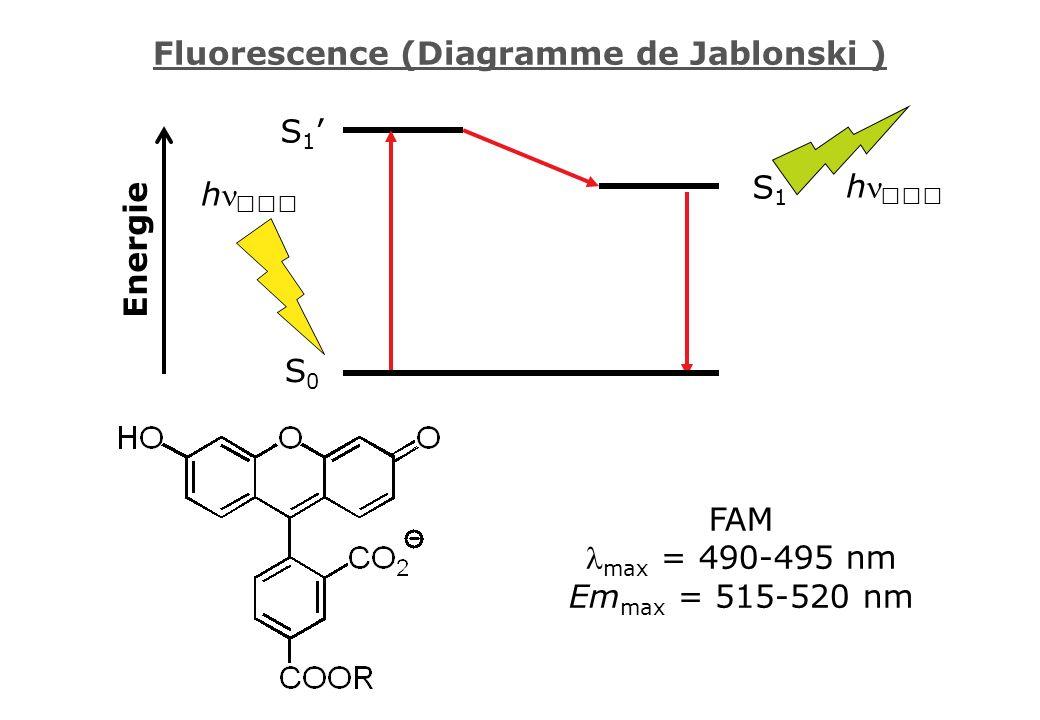 Fluorescence (Diagramme de Jablonski )