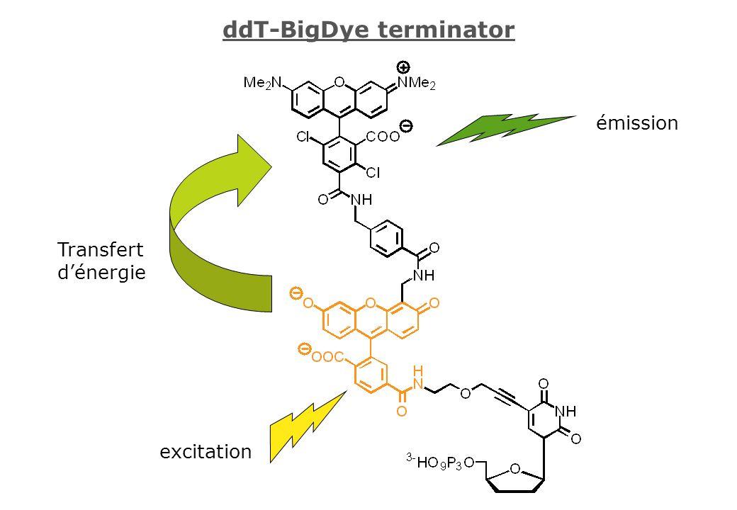 ddT-BigDye terminator