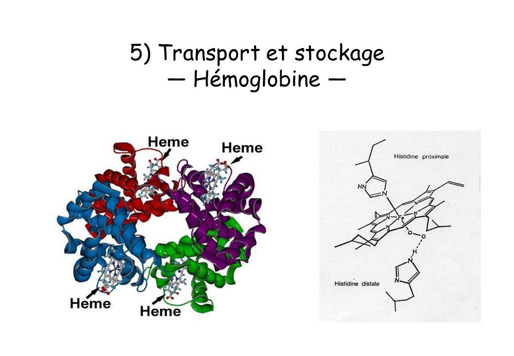 5) Transport et stockage — Hémoglobine —