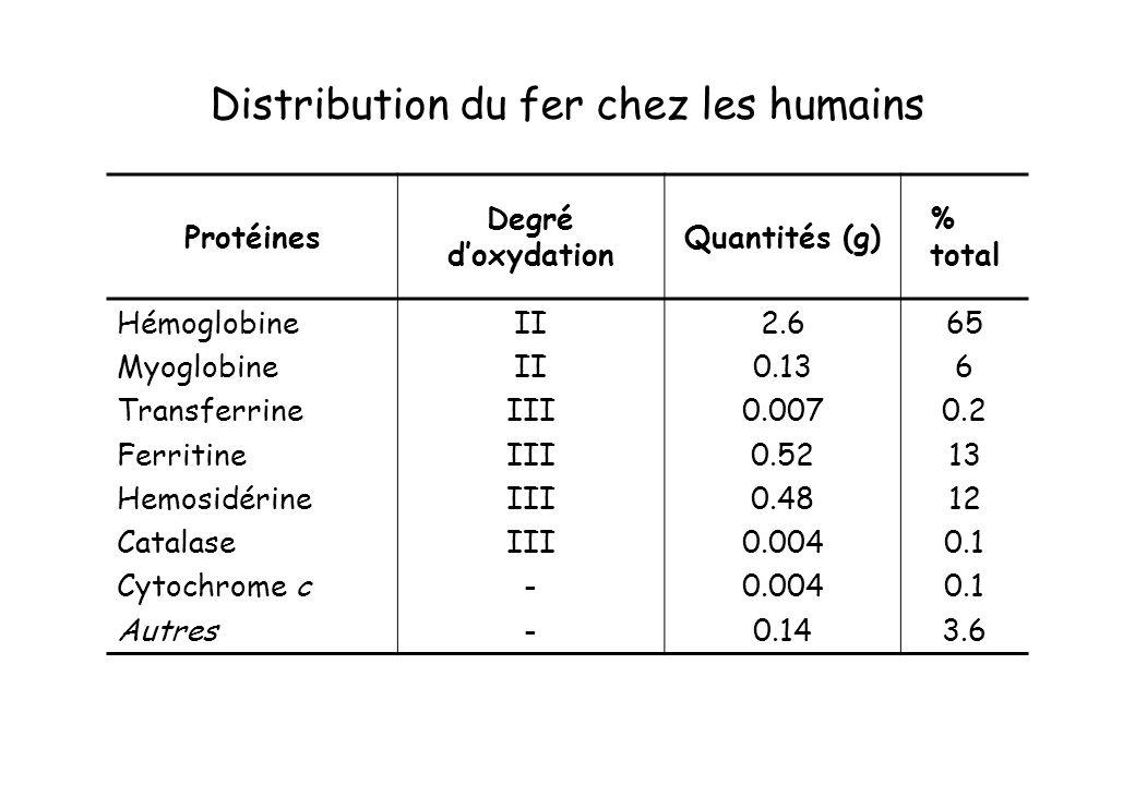 Distribution du fer chez les humains