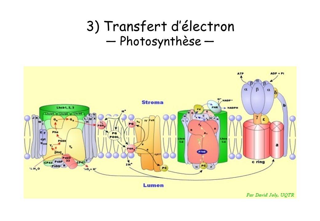 3) Transfert d'électron — Photosynthèse —