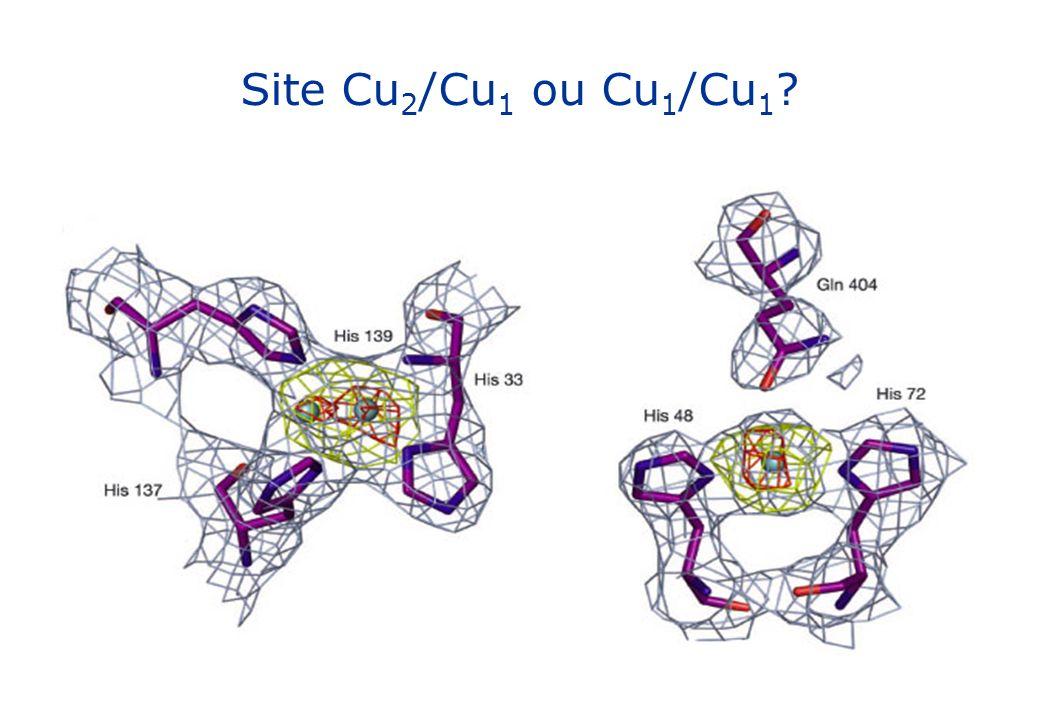 Site Cu2/Cu1 ou Cu1/Cu1