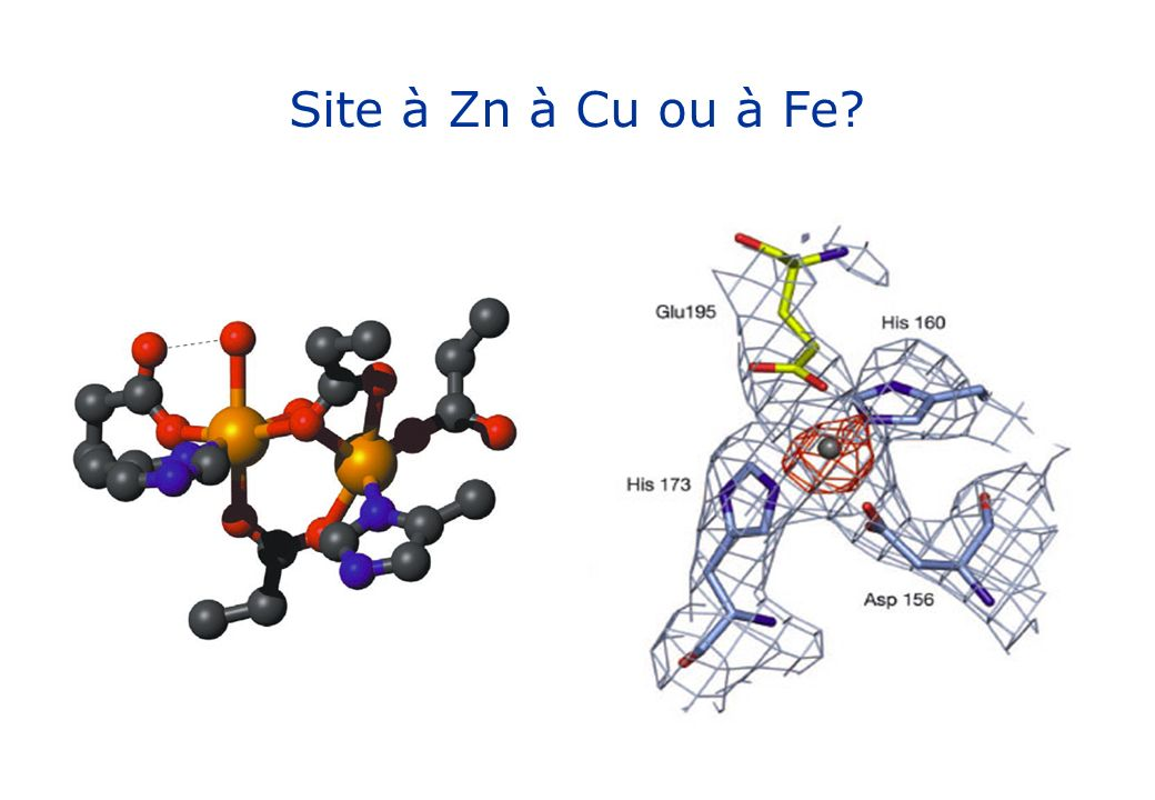 Site à Zn à Cu ou à Fe