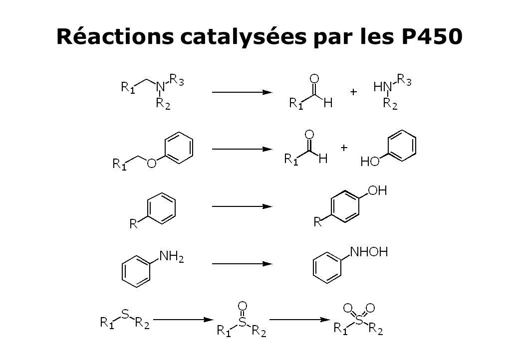 Réactions catalysées par les P450