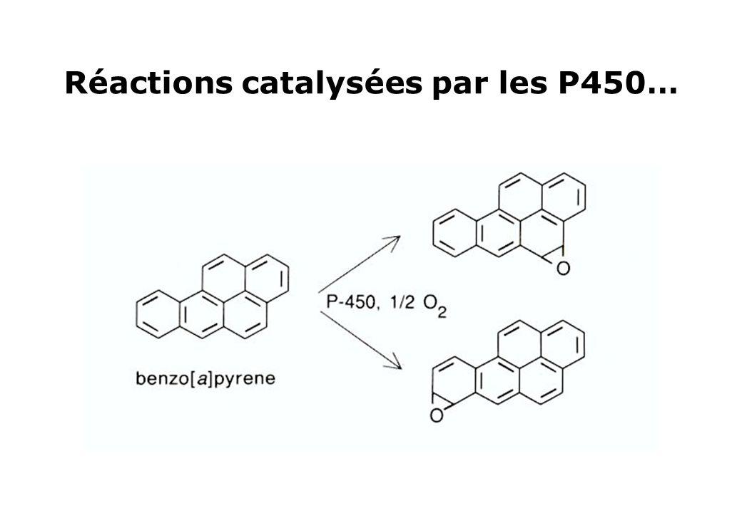 Réactions catalysées par les P450…
