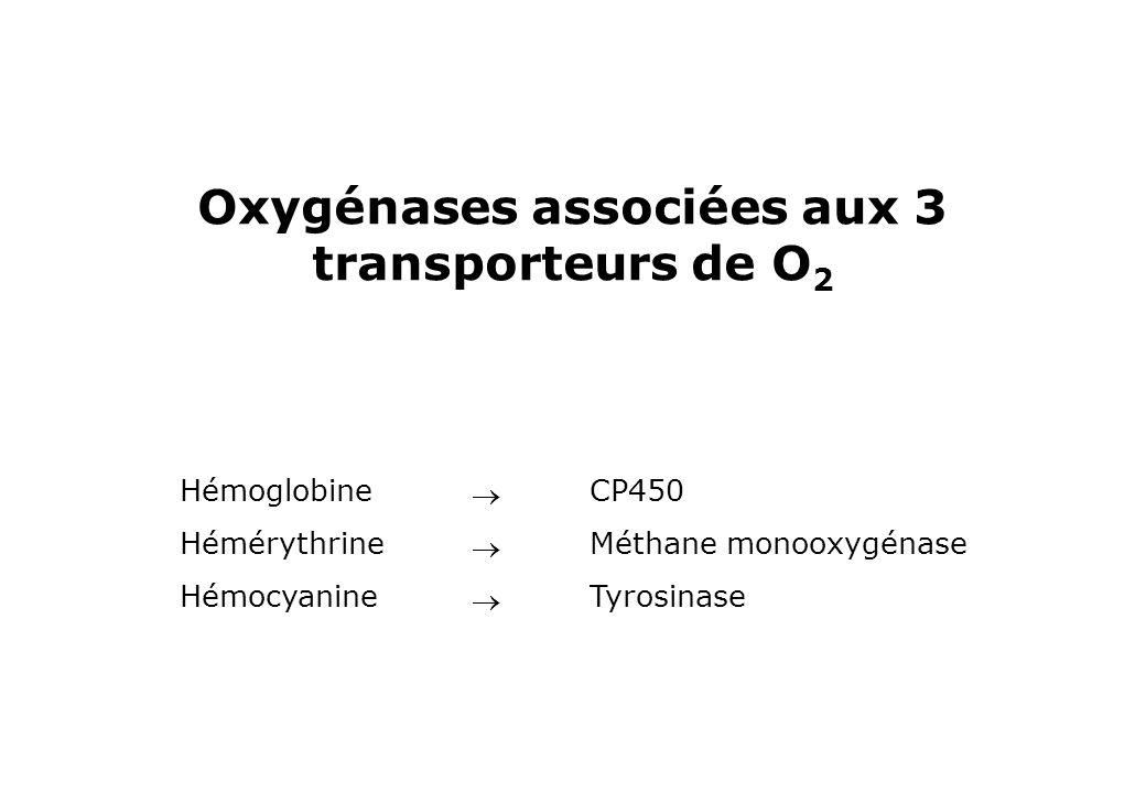 Oxygénases associées aux 3 transporteurs de O2