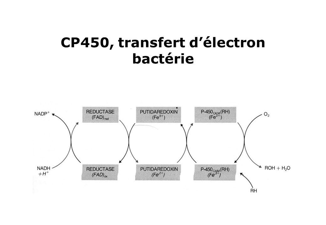 CP450, transfert d'électron bactérie