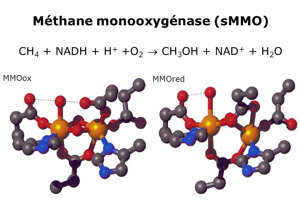 Méthane monooxygénase (sMMO)