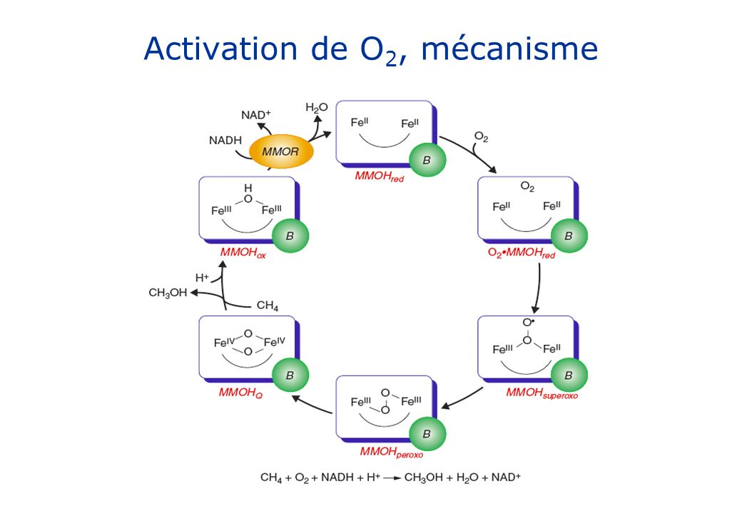 Activation de O2, mécanisme