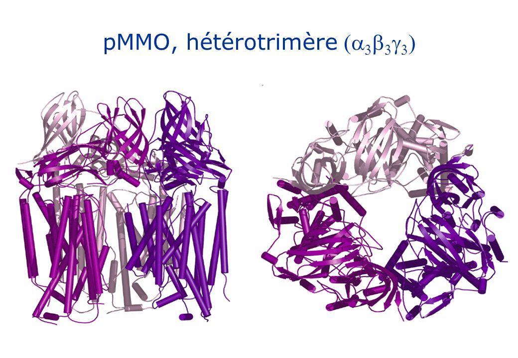 pMMO, hétérotrimère (a3b3g3)