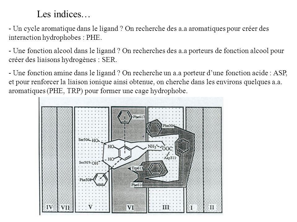 Les indices… - Un cycle aromatique dans le ligand On recherche des a.a aromatiques pour créer des interaction hydrophobes : PHE.